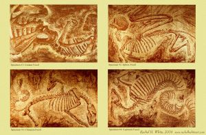 fossil prints poster