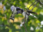Swallow: feeding of fledgeling by ohlopkov