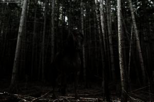 Out Of The Woods by xxtgxxstock