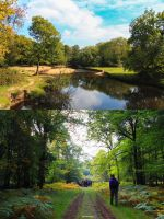 New Forest National Park by Musiciousity