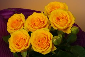 Yellow roses... by danyel-i