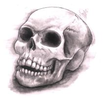 Skull drawing by ZacPensol