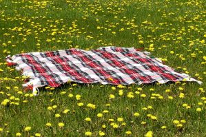 Picnic Blanket in Field 5 by loopyker-stock