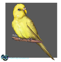 Gift: to my lovely friends budgerigar: RIP by Black-Wing24