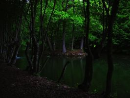 calm forest before the storm by Jantiff-Stocks