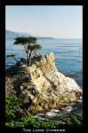 The Lone Cypress by Fraeulein
