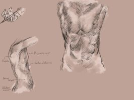 Altair Anatomy Study by Fratellanza