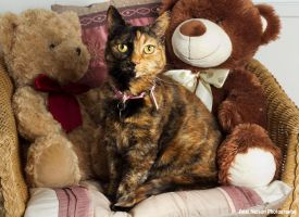 Molly and teddies by AngiWallace