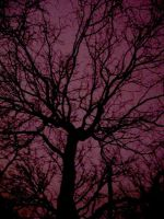 trees that look like veins by Din0saur