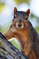 Squirrel Portrait by MicWits101