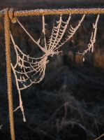 Spider Web by happyandbleeding