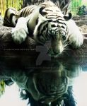 White Tiger by xxxsulaxxx