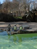 Pinguin II by two-ladies-stocks