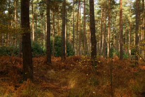Forest Stock by Redherc46