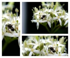 Ants Triplet by Tricia-Danby