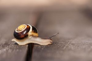Yes, snails can tip toe by Guizzmoh