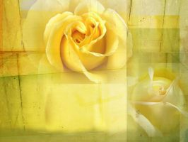 Yellow Roses by Dody49
