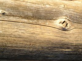 Texture - wood 1 by SanStock