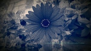 Blue Beauty by laurenlilly757