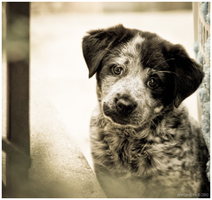 Love Me by kkart