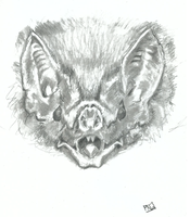Desmodus rotundus (common vampire bat) by GenkiPuck42