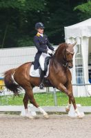 Dressage Stock - XIII by Summerly