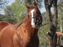 Lumago (Thoroughbred colt-2011) by Romydb