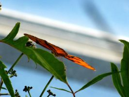 Just A Sliver of Orange by needletail