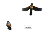 American Robins Cut-Out Stock by madetobeunique