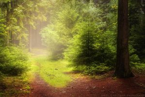 The Hidden Path by MarcoHeisler