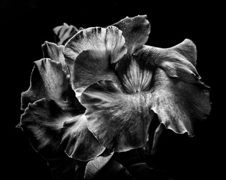 Backyard Flowers In Black And White 2 by thelearningcurve-da