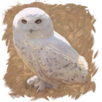 Hedwig by Aerie-Faerie