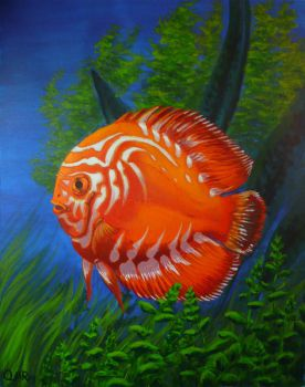 Orange Discus Fish by mighty5cent