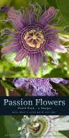 Passion Flowers - Stock Pack by kuschelirmel-stock