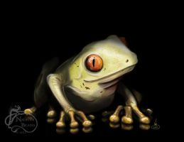 Albino Red Eyed Tree Frog by NadilynBeato