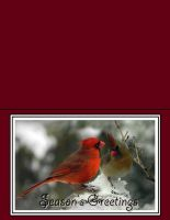 cardinal lou-in-canada Xcard-8 by Artemiche