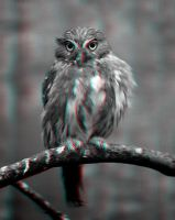 Pygmy Owl 3-D conversion by MVRamsey