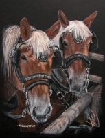 Two Work Horses by mbeckett