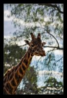 Hungry Giraffe by WiDoWm4k3r