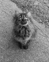 Cat b/w by MyMindSeeThis