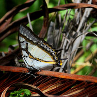 Powdered Sunlight by Blue-Berry-Boy