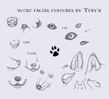 Wolf Facial Features by Tebyx