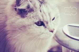 My fluffy kitty by StephanieNancarrow