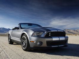 Shelby GT500 by lg-studio