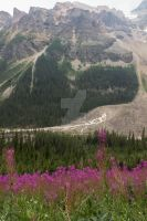 Fireweed by the Mountains by aydonis