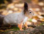 Squirrel by juhku