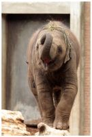 cool little elephant by Claudia008