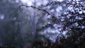Dewy Web #5 by Songundercover