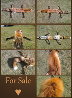 Juvi Red Fox - FOR SALE~ by MilkyFoxWhiskers