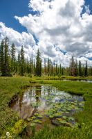 Lily Ponds and Clouds by mjohanson